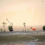 レンソイス砂漠の野生動物:縦断トレッキング(ブラジル)