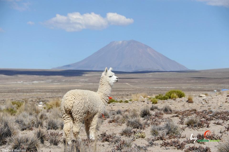 ペルーの古都アレキパから、コン...