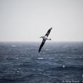 ドレーク海峡を越えて、南極へ -探検船で行く南極クルーズ-