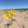 <動画>チリ・アタカマ砂漠の奇跡の花園②/アニャニュカ