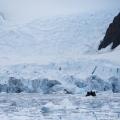 氷河に覆われた静寂の湾:パラダイスハーバー
