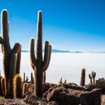 ウユニ塩湖の聖なるサボテン島「インカワシ」の絶景