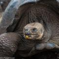ガラパゴス諸島のシンボル:世界最大のゾウガメ