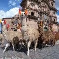 アンデス高原で人と供に暮らすラクダ「リャマ」