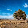 パタゴニアの風の造形:レンズ雲と斜めの木