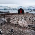 """狂おしい""""地球の鼓動""""④:ペンギンの国「南極大陸」"""