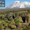 アフリカ最高峰キリマンジャロ登頂:5895m