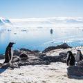 フォトギャラリー:南極