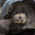 フォトギャラリー:エクアドル&ガラパゴス諸島
