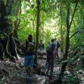 ブラジル・アマゾン:ジャングルロッジ滞在、アマゾン・クルーズ