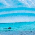 「南極大陸」躍動する生命②:アザラシの楽園
