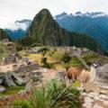ペルー・マチュピチュ遺跡のマスコット:リャマ