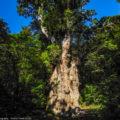 屋久島・宮之浦岳③:縄文杉の森から白谷雲水峡・照葉樹林へ