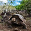 ガラパゴス旅行:レジェンド号・コーラル号クルーズで巡る《エクアドル》
