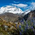 ペルー最高峰ワスカランと野生のルピナス