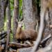 パタゴニアの希少動物「ウエムル鹿」と名峰フィッツロイ