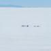 ウユニ塩湖の朝日と夕日:塩の大地の華麗な色彩変化(ボリビア)