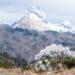 ペルー・アンデス山脈のセーター植物:高原サボテン