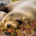 天敵がいない野生動物の楽園:ガラパゴス諸島レジェンド号クルーズ