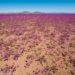 チリ・アタカマ砂漠の奇跡の花園